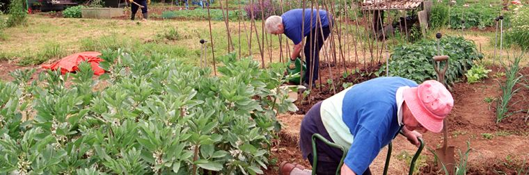 The Allotment at The Hope Centre, Minehead